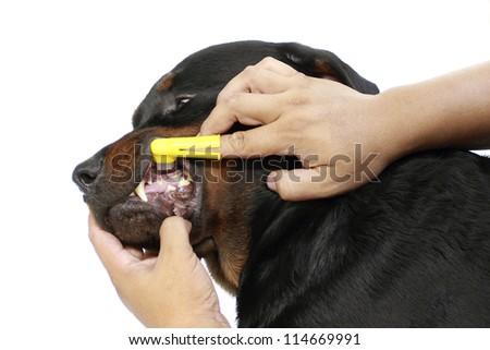 Brush the dog. - stock photo