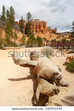 Bryce Canyon national park in USA with old tree trunk on pathway