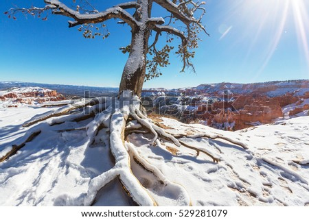 Bryce canyon  with snow in winter season.
