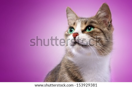 Btautiful cat on a purple background. - stock photo