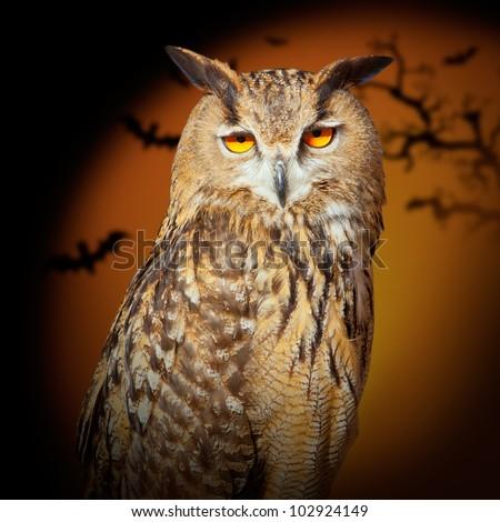 Bubo bubo eagle owl night bird in halloween bat orange background [ photo-illustration] - stock photo