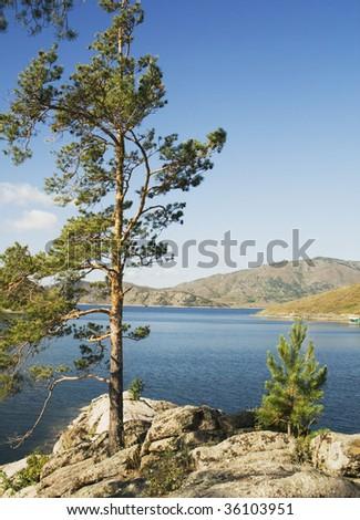 Buchtarma. Nature of the Eastern Kazakhstan. Vertical landscape - Pine, Lake, mountain. - stock photo