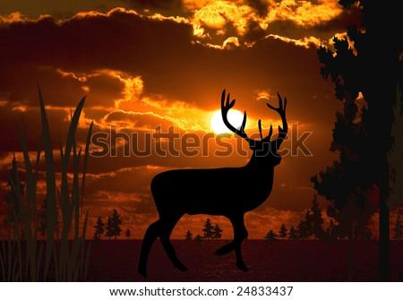 Buck at sunset - stock photo