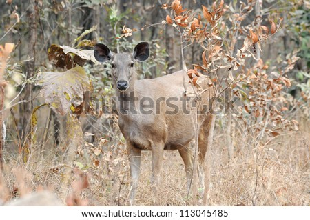 Buck in forest - stock photo