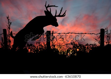 Buck Jumping Barved Wire Fence at Sunset - stock photo