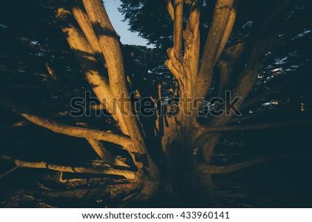 Bucket Tree in Wellington Botanic Garden, Vintage color style. - stock photo