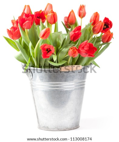 bucket with tulips isolated on a white background