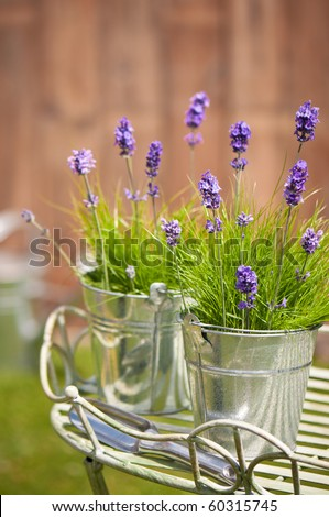 Buckets of lavender flowers amongst grass in the garden with trowel, watering can in background - stock photo