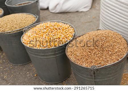 buckets of wheat, corn and barley grains barley - stock photo