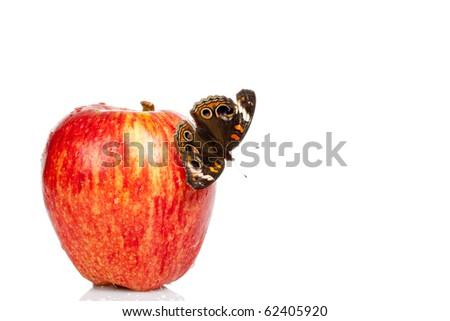 Buckeye Butterfly isolated on an apple - stock photo