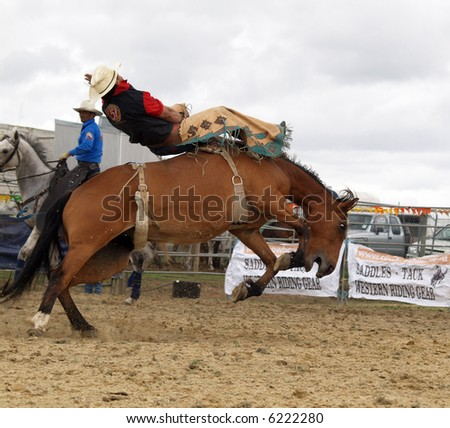 Bucking Bronco - stock photo