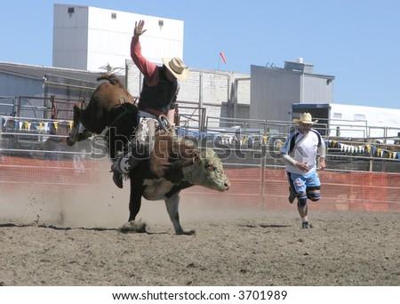 Bucking Bull - stock photo