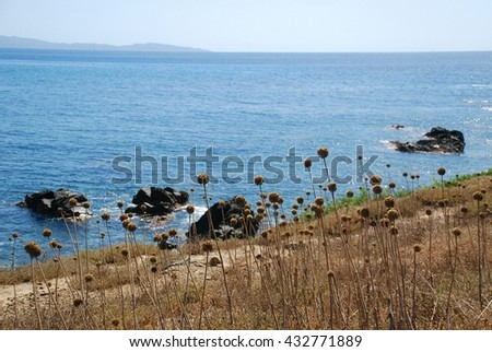 Buckwheat, dry grass and the sea. A beautiful day on Corsica Island, France - stock photo