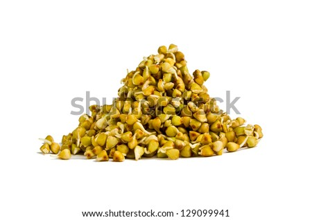 Buckwheat sprouts - stock photo