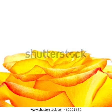 Bud of an orange rose close up - stock photo