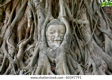 Buddha Head at Ayuttaya wild - stock photo