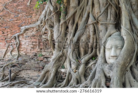 Buddha head encased in tree roots