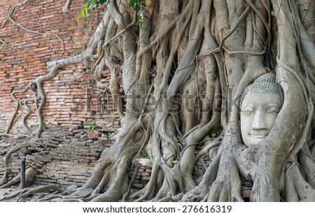 Buddha head encased in tree roots - stock photo