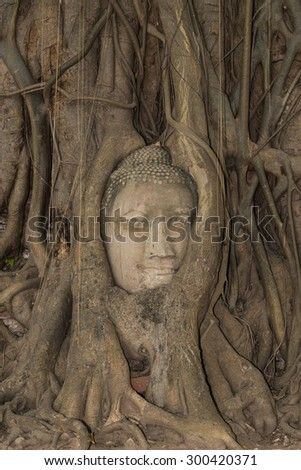 Buddha Head hidden in the tree roots. Ancient sandstone sculpture at Wat Mahathat. Ayutthaya, Thailand - stock photo