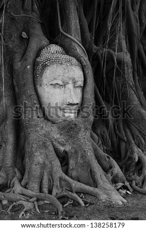 buddha head in banyan tree roots