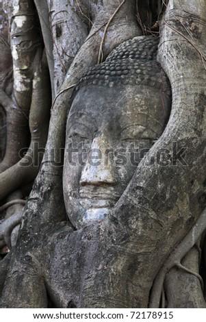 Buddha head in tree at Ayutthaya Thailand - stock photo