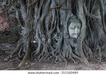 Buddha Head in Tree Roots, Wat Mahathat, Ayutthaya. This ancient temple was built during the 14th century, but was reduced to ruins in 1767 - stock photo