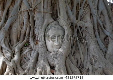 Buddha head in tree.thailand