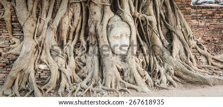 Buddha head overgrown by fig tree in Wat Mahathat. Ayutthaya historical park. Panorama - stock photo