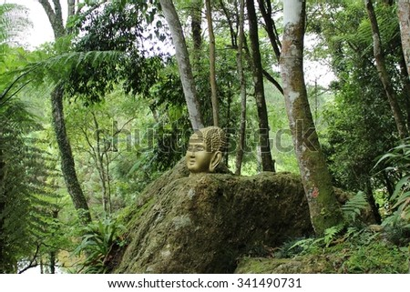 Buddha Icon on Forest
