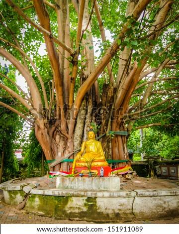 Buddha image sitting under Bodhi tree - stock photo