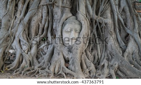buddha of image head in root at wat mahathad temple