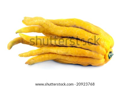 Buddha's hand lemon on a white background. Unusual citrus fruit from Asia. - stock photo