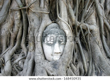 Buddha's head embedded in tree roots