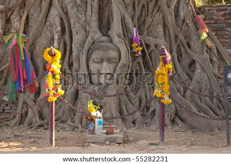 Buddha statue in the tree