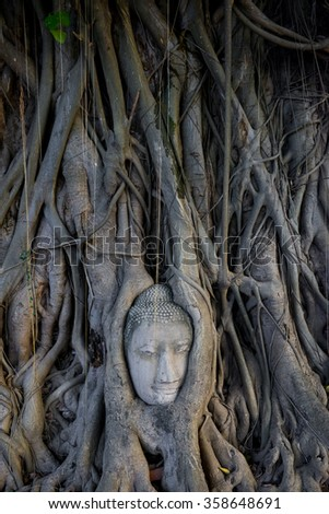 Buddha statue's head in the root of tree