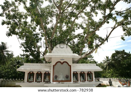 Buddhist shrine under a holy bodh tree at a temple, believed to be propagated from a cutting of the tree under which the Buddha gained enlightenment. - stock photo