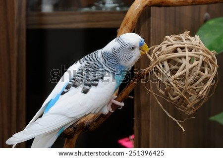 budgerigar perched on dry branch - stock photo