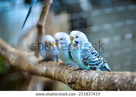 Budgies in a cage - stock photo