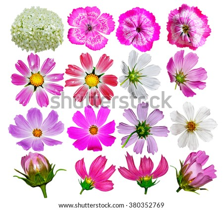 Buds of colorful flowers isolated on white background. delicate flowers - stock photo