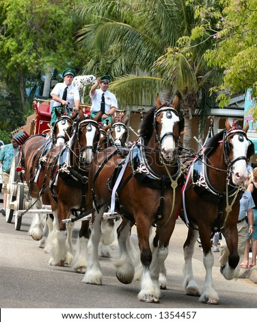 Budweiser Clydesdales in parade - stock photo
