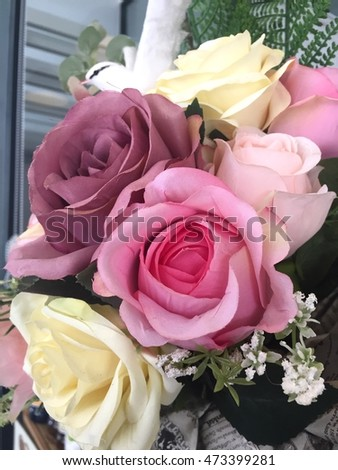 Bueatiful Roses flowers background with close up