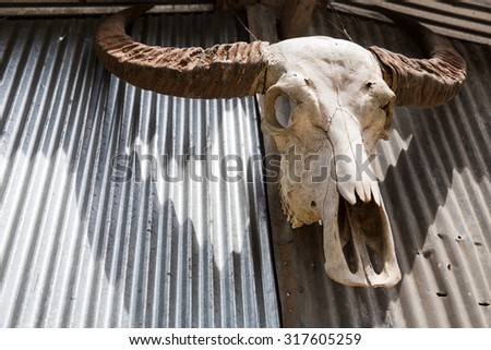 Buffalo bones on the pattern of roof zinc - stock photo