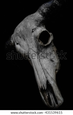 Buffalo Skull black and white. vintage low key - stock photo