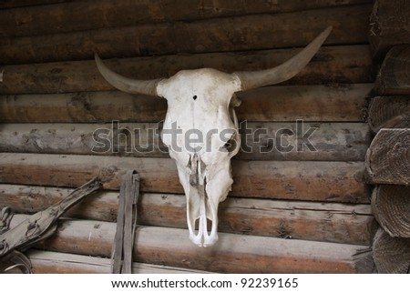 buffalo skull with horns