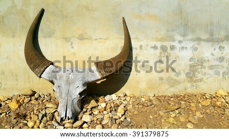 Buffalo skull with horns on concrete wall - stock photo