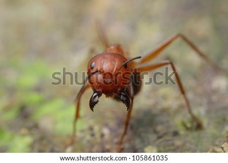 bug - stock photo