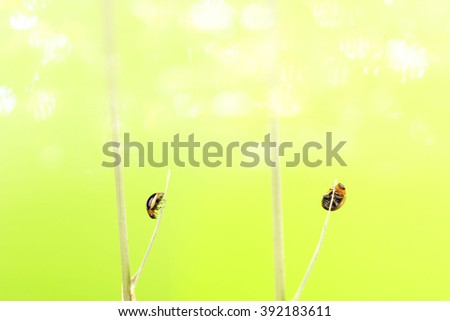 Bug branch perched on Tree, copy space and green bokeh background