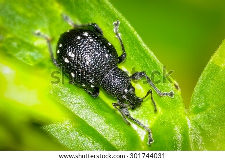 Bug in the grass - stock photo