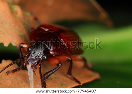 bug insect - stock photo