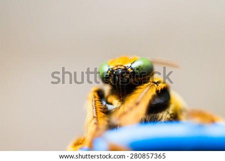 Bug Insect Macro - stock photo